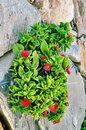 Plant with red flowers small in bodrum Royalty Free Stock Photo