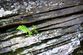 Plant on a rock Royalty Free Stock Photo