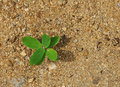 Plant on sand - New life Royalty Free Stock Photo