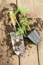 Plant seedling and trowel Stock Image