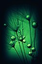 Plant seeds with water drops abstract picture of Royalty Free Stock Photography