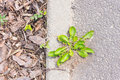 Plant and sidewalk green plants growing on a Royalty Free Stock Photo