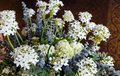 Plant with small white flowers wonderful indoor Stock Photos