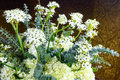 Plant with small white flowers wonderful indoor Royalty Free Stock Images