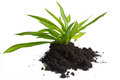 Plant and Soil. Stock Photography