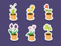 Plant stickers illustration of on white Stock Image