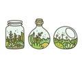 Plant in terrariums