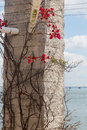 Plant with thorns and flowers on stone pillar curly Stock Image