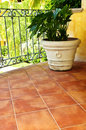 Plant on tiled Mexican veranda Royalty Free Stock Photo