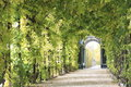 Plant tunnel beautiful green in schönbrunn garden vienna Stock Photo