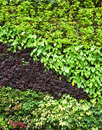 Plant wall part of the Royalty Free Stock Image