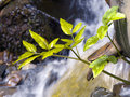 Plant and waterfall Royalty Free Stock Images