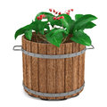 Plant in the wooden barrel see my other works portfolio Stock Images