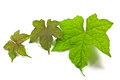 Plantas medicinales Imagen de archivo