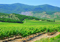 A plantation of grapevines, mountains and blue sky Royalty Free Stock Photos
