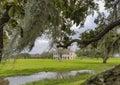 Plantation house in Louisiana Royalty Free Stock Photo