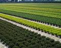 Plantation of ornamental shrubs, and trees Royalty Free Stock Photo