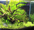 Planted aquarium freshwater with fishes Stock Photo