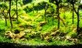 Planted tropical freshwater aquarium Royalty Free Stock Photo