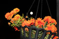 A planter hanging with orange halloween colored flowers and the moon glowing in the backdrop this would make a good halloween Royalty Free Stock Photo