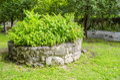 Planter Royalty Free Stock Photo