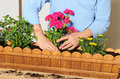 Planting a flower box Royalty Free Stock Photo
