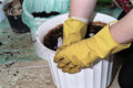 Planting a flower work at home and spring cleaning Stock Photos