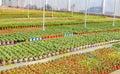 Planting Flowers Greenhouses