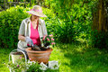 Planting flowers a mature woman sunny day Royalty Free Stock Photo