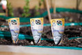 Planting money in Garden Bed Royalty Free Stock Photo