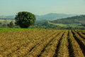 Planting pit prepared soil for with moutains in the background Royalty Free Stock Photo
