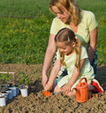 Planting seedlings in spring time Stock Images