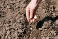 Planting seeds Royalty Free Stock Photography