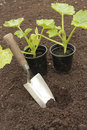 Planting seeds in soil Royalty Free Stock Photography