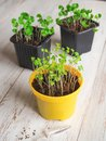 stock image of  Planting seeds in the spring. Seeds and sprouts.