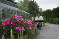 Planting senior man a sapling Royalty Free Stock Photography