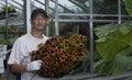 Planting senior man a sapling Stock Photos