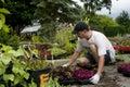 Planting senior man a sapling Stock Images