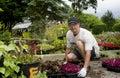 Planting senior man a sapling Royalty Free Stock Images