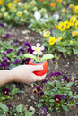 Planting solar powered flower Royalty Free Stock Image