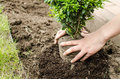 Planting in the spring Royalty Free Stock Photo
