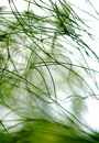 Plants abstract Royalty Free Stock Images