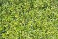 Plants background display in bangkok thailand Stock Image