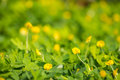 Plants on a background of green nature Royalty Free Stock Image
