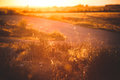 Plants of background with sunset orange colors Royalty Free Stock Photography