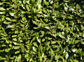 Plants background thick with leaves italy Stock Photography