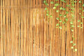 Plants on a bamboo wall Royalty Free Stock Photo