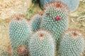 Plants cactus desert Royalty Free Stock Photo