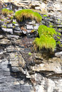 Plants on a cliff face Royalty Free Stock Photo