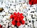 Plants closeups macro shots viberants Royalty Free Stock Photo